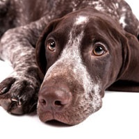 Get the latest news and information on dog recalls from dog food recalls and dog product recalls.