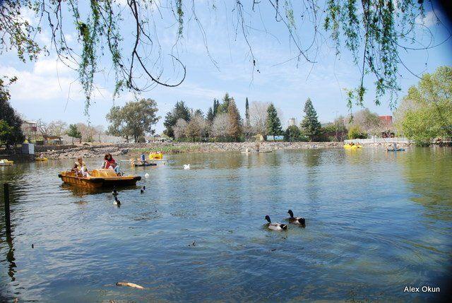האגם החי