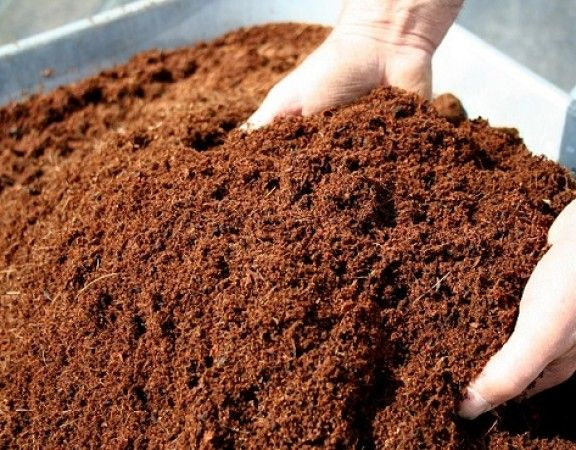 how to make coco peat at home in india