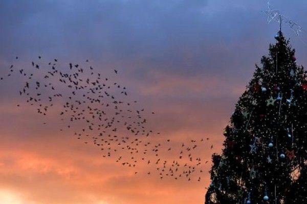 Los pájaros tienen un sexto sentido para huir antes de las tormentas