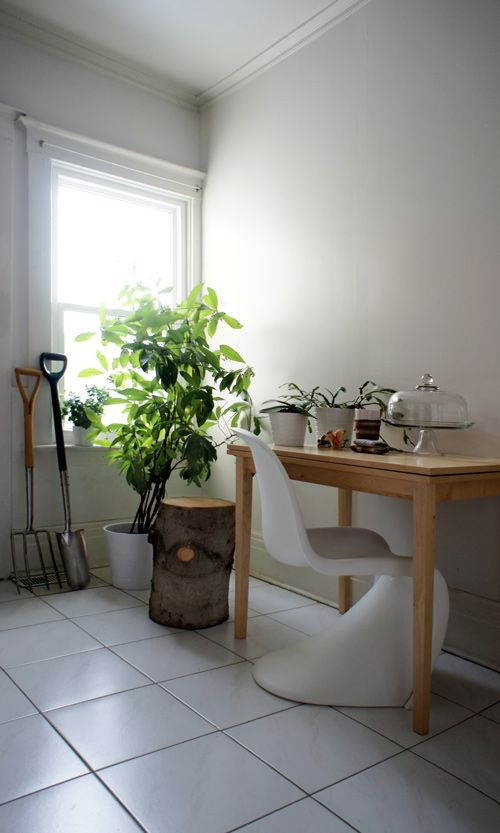 schefflera? (sheesh, I know nothing of common house plants) ...Hmm - a nice tree stump would make a nice plant stand!: