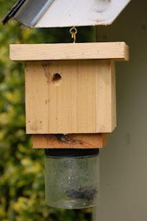 Carpenter Bee Trap, I need this!