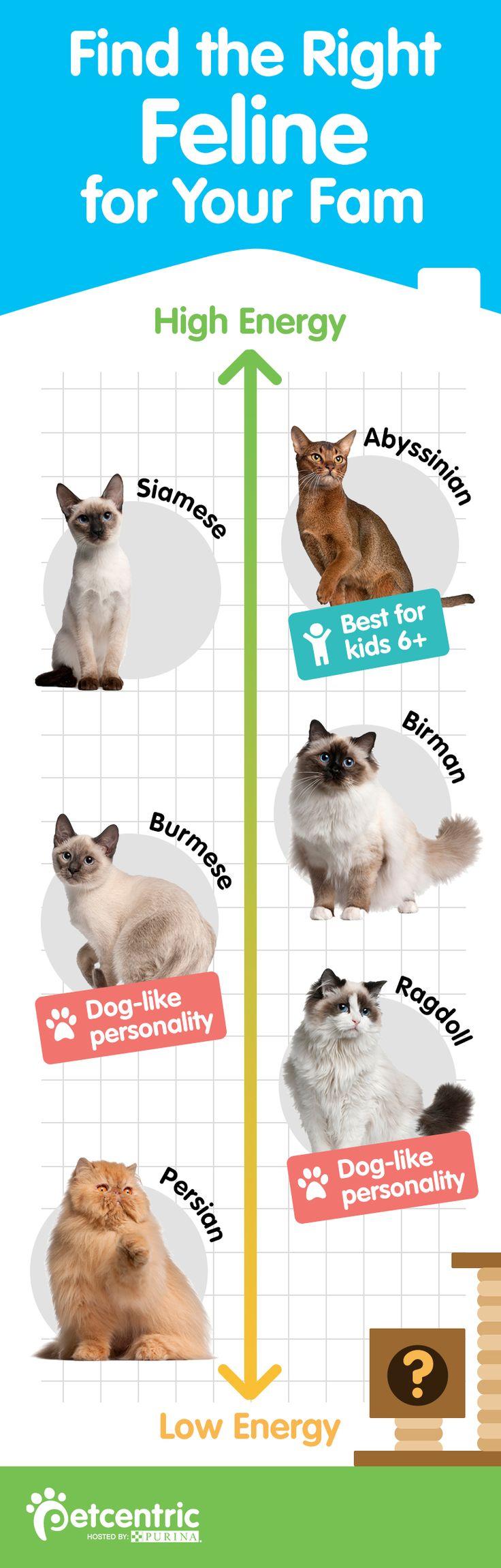 Best 25 Cat breeds ideas on Pinterest