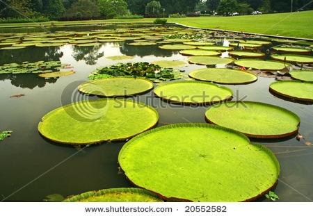 Botanical Gardens, Bogor, Indonesia.