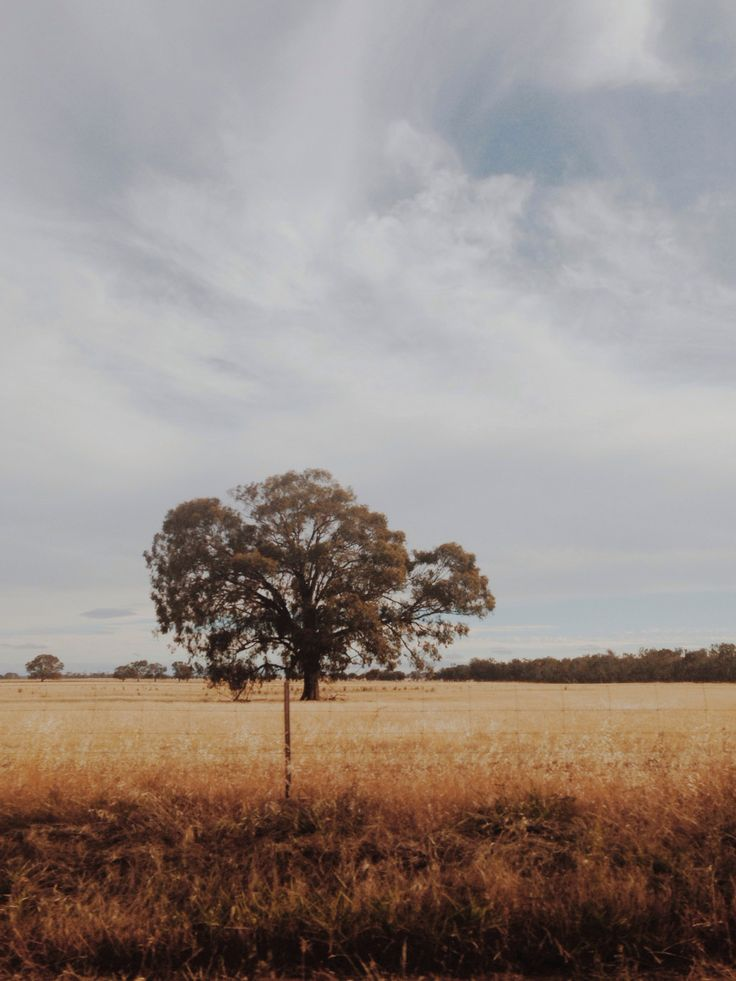 drivebyshooters.wordpress.com #travel #driving #tree #field #farm #Australia #victoria #drive #travel #road #roadtrip #melbourne #dry #fence #grass #trees
