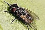 http://www.ehow.com/how_5137321_kill-house-flies-using-chemicals.html