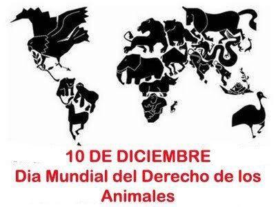Hoy también conmemoramos lo derechos de los animales: a la vida y a la integridad física, a una vida saludable y a la libertad de movimiento