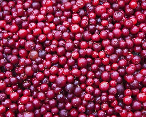 Healthy New Sperfoods - Lingonberries