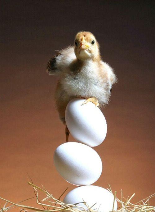 A baby bird on the egg