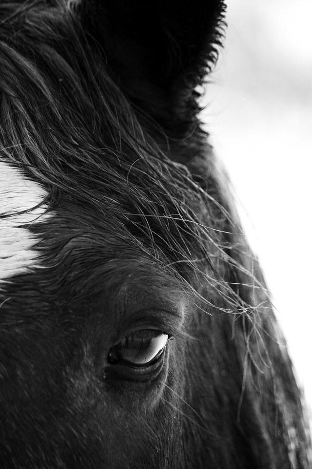 Horse Closeup by Hannah H