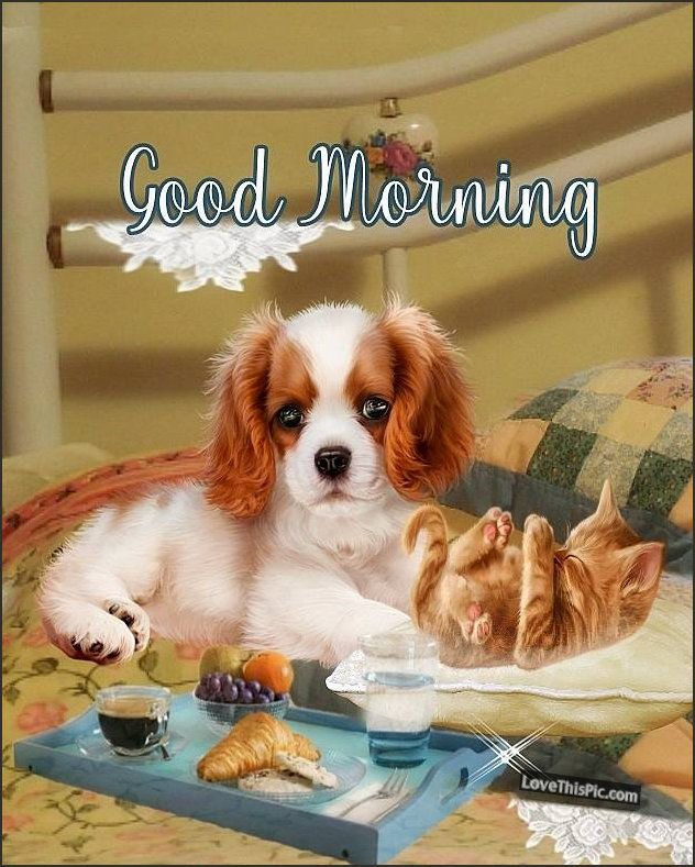 Puppy And Kitten Good Morning cute animals pets beautiful good morning  quotes | Good morning puppy, Cute puppies and kittens, Cute good morning  pictures