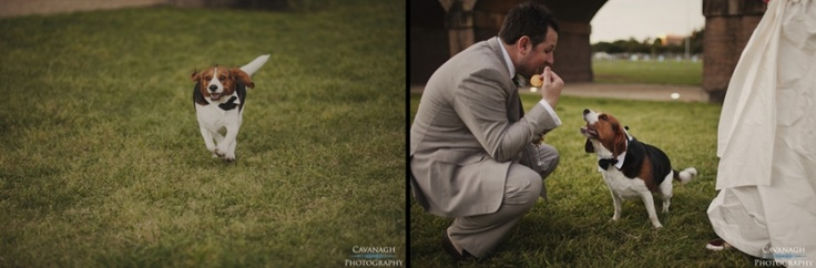Pets at weddings. Why not include mans best friend :)  Image: Cavanagh Photography http://cavanaghphotography.com.au