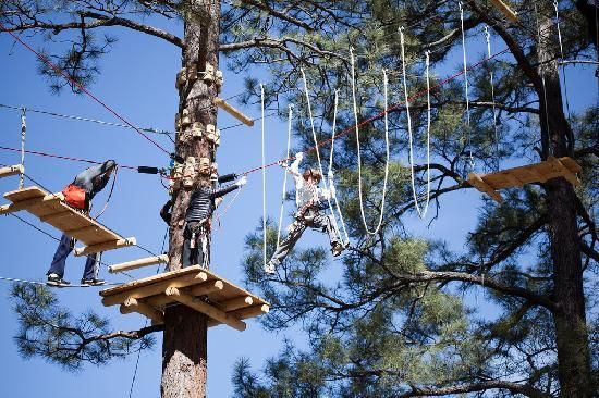Flagstaff Extreme Tree Top Adventure Course Its A