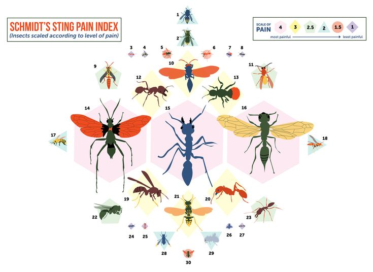 Schmidts Sting scale - Pain scale created by Entomologist Justin O. Schmidt, who has spent decades getting himself stung to develop this scale - One word - AMAZING