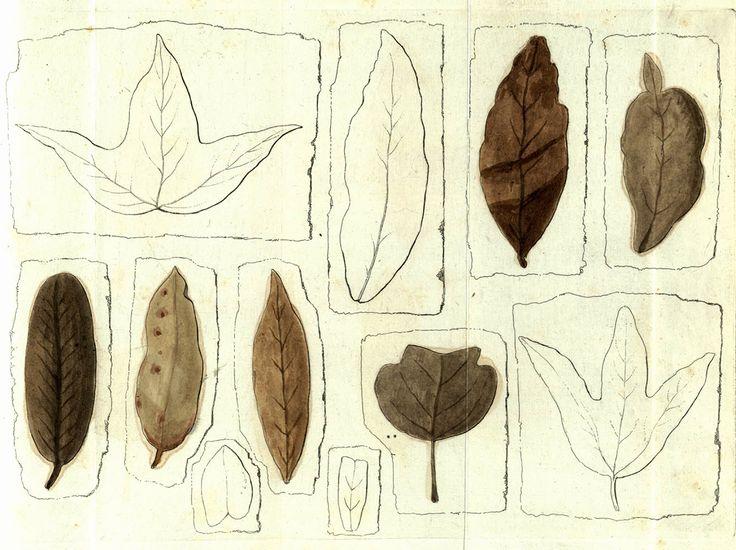 #foglie #disegno #illustrazione