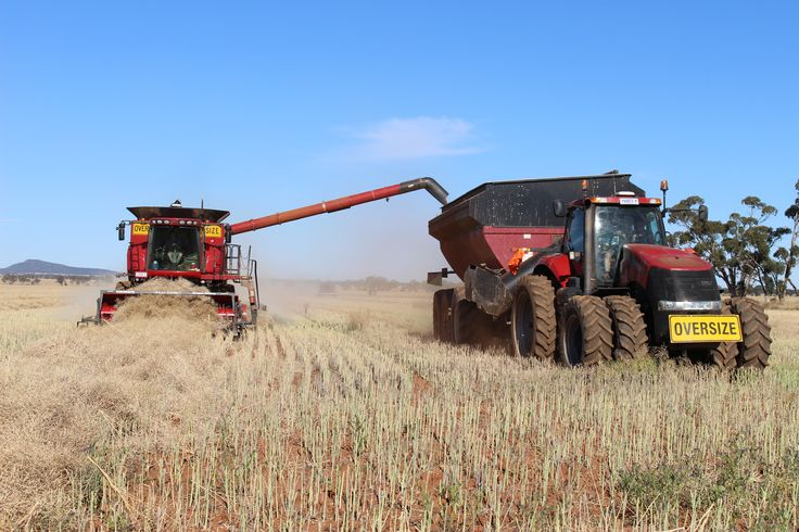 Unloading the canola from the header (combine) into the chaser bin as they go along