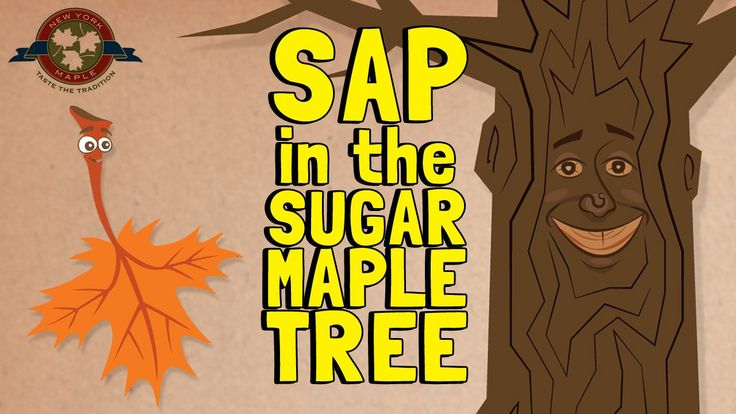 This video was produced by the New York State Maple Producers Association. It was created to educate the public on the process of sap production in maple trees. Visit…