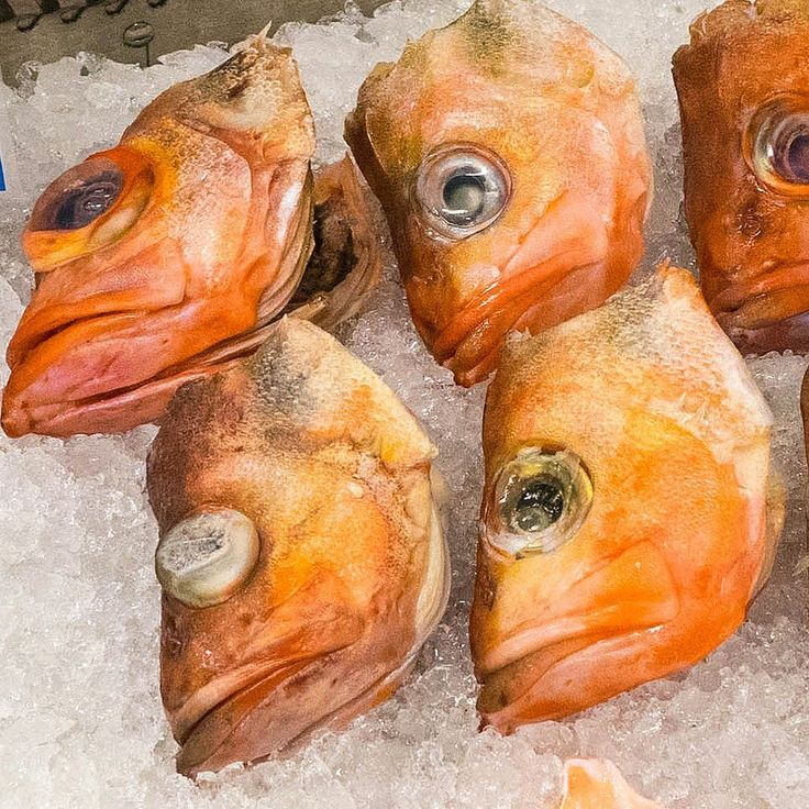 Some people in Hammerfest salt boil and eat them according to the fish store sales person. Would you eat them?   Find all our trips to Norway on our blog: http://www.hikeventures.com/destinations/