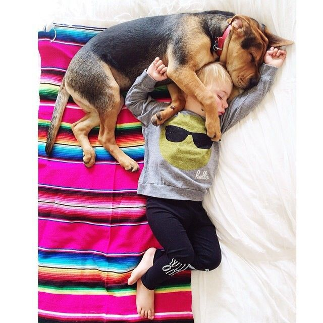 Best Theo And Beau Images On Pinterest Cities Happiness And - Theo beau cutest animal human pairing ever