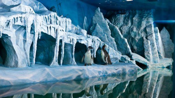 Aquarium Океанариум
