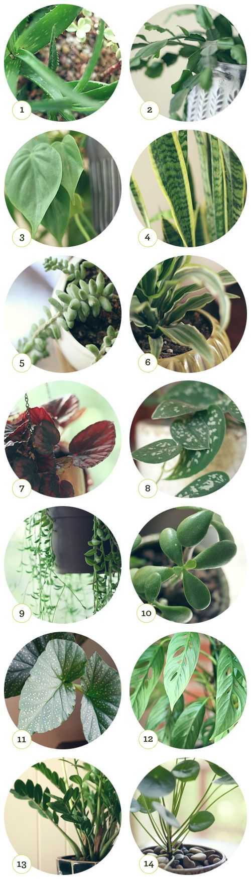 1. aloe  2. christmas cactus  3. philodendron  4. snake plant  5. donkey's tail plant  6. lemon lime plant  7. begonia  8. silver philodendron  9. string of bananas plant  10. jade  11. angle wing begonia  12. swiss cheese plant  13. z plant  14. chinese money plant