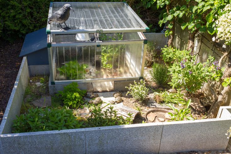 Russian Tortoise Outdoor Substrate Google Search