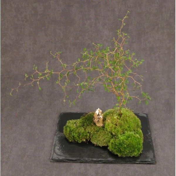 263 best mini gardens kokedama kusamono images on for Jardin hansen