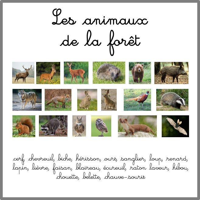 Images classifiées et nomenclatures pour travailler sur les animaux de la forêt : leur nom, mâle, femelle, petit et leurs empreintes. Maternelle ou cycle 2