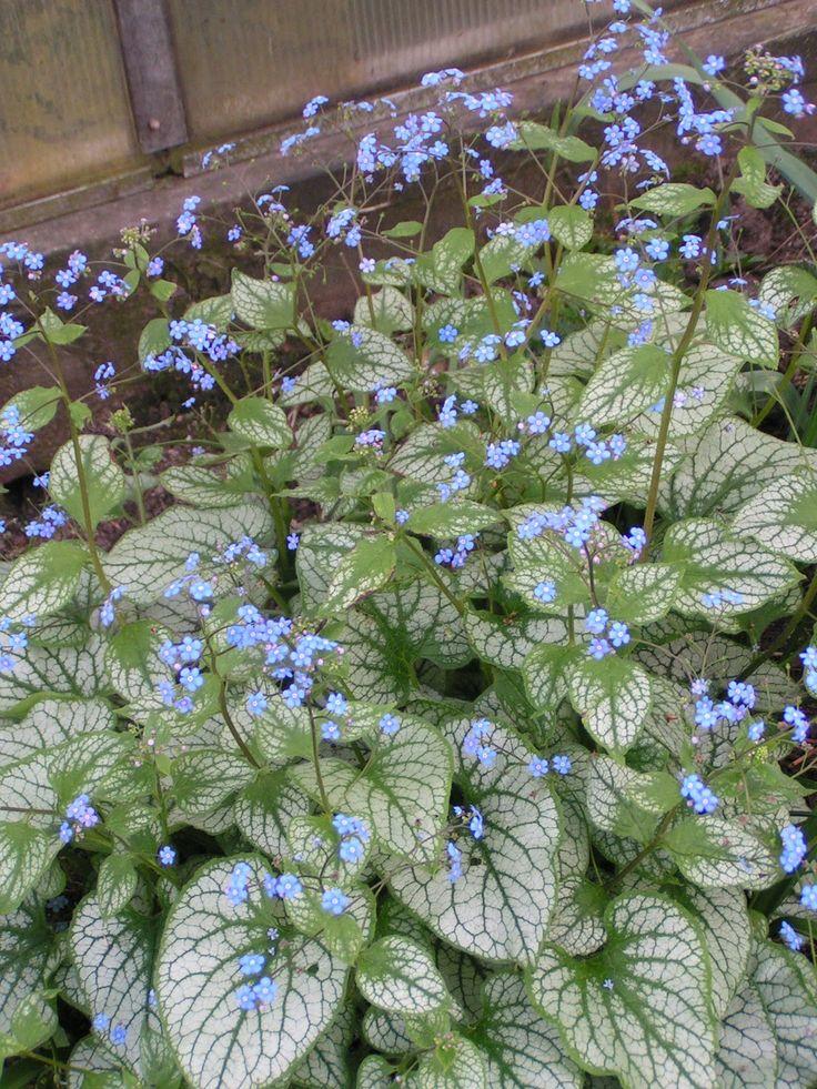 Merjas Trädgård: Nya marktäckande växter