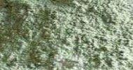 L'argilla molto efficace per la pulizia dei tappeti e moquette che non possono essere lavati in lavatrice, perché possiede dei siti attivi che... il contenuto del feed è un riassunto del post che i le