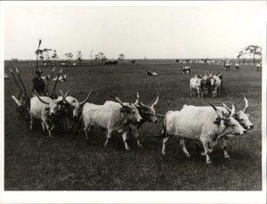 1930 balogh rudolf fotomuzeum.hu