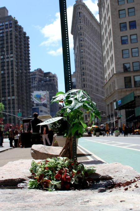 Jardín de guerrilla !!! Crean jardines aprovechando los agujeros del asfalto de las ciudades.