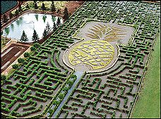 Try to make my way through the maze at the Dole Pineapple Plantation. I did a similar one as a kid with my sister and had so much fun!