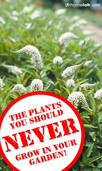 The plants you should never grow in your garden.