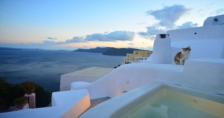 "Kitty your new neighbor ! Check Villa ""Earth"" - Santorini, Greece ! You can rent it ! #luxury #villa #rent #holidays #greece #vacances #grece #alouer #aroomwithaview #sea #bedroom #decoration #swimmingpool #beautiful #sunset #luxuryvilla"