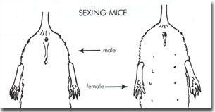 Het is de muis. de linker muis is het mannetje en de rechte muis is het vrouwtje.
