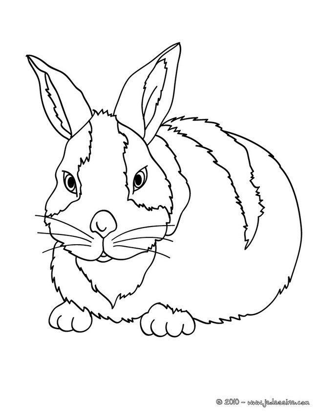Joli coloriage d'un lapin bi-color. Pour amuser les enfants ou détendre les plus grands ...