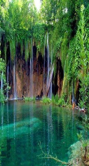 Descubre la selva y la increible vegetacion de los parques naturales de #Tenerife