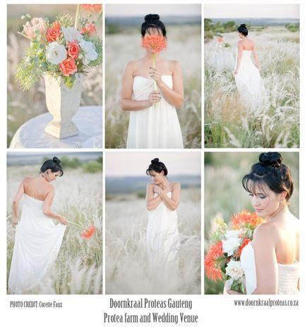 Protea Farm Wedding Venue Gauteng