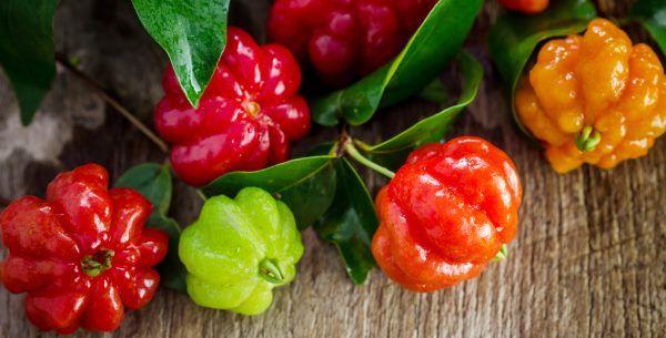 Folha de pitanga - chá e óleo: usos e benefícios
