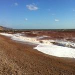 Devon red sea...