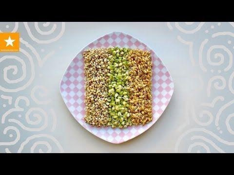 Как проращивать зерна. Очень детальная инструкция от Мармеладной Лисицы. WHEAT GERM - YouTube