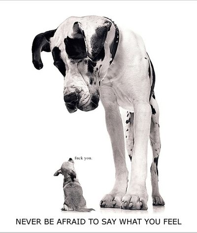 !: Great Danes, Funny Image, Funny Dogs, Sayings What, Funny Quotes, Mr. Big, Afraid Quotes, Little Dogs, Big Dogs