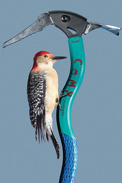 biomimicry | BIOMIMICRY MAY BE MAJOR ECONOMIC DRIVER FOR SAN DIEGO
