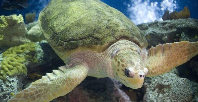 Mexico: Save Endangered Sea Turtles from Deadly Gillnets