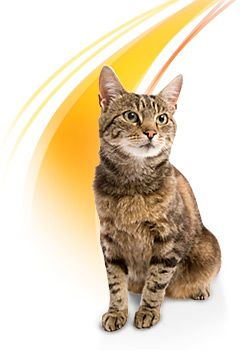 Is Dry Cat Food Bad For Male Cats