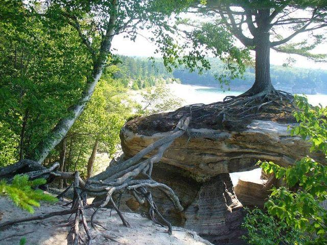 ALLPE Medio Ambiente Blog Medioambiente.org : El pino imposible que vive sobre la Roca de la Capilla