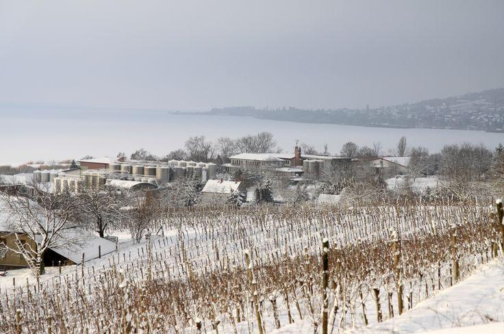 Varga Pincészet - téli látkép