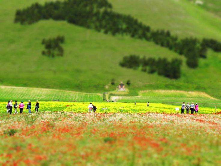 Castelluccio di Norcia e il suo altopiano mozzafiato - Parco nazionale dei Monti Sibillini / Castelluccio di Norcia and its breathtaking plateau - Monti Sibillini National Park #Castelluccio #Norcia #Piangrande #MontiSibillini #NationalPark #ParcoNazionale #Italia #Italy