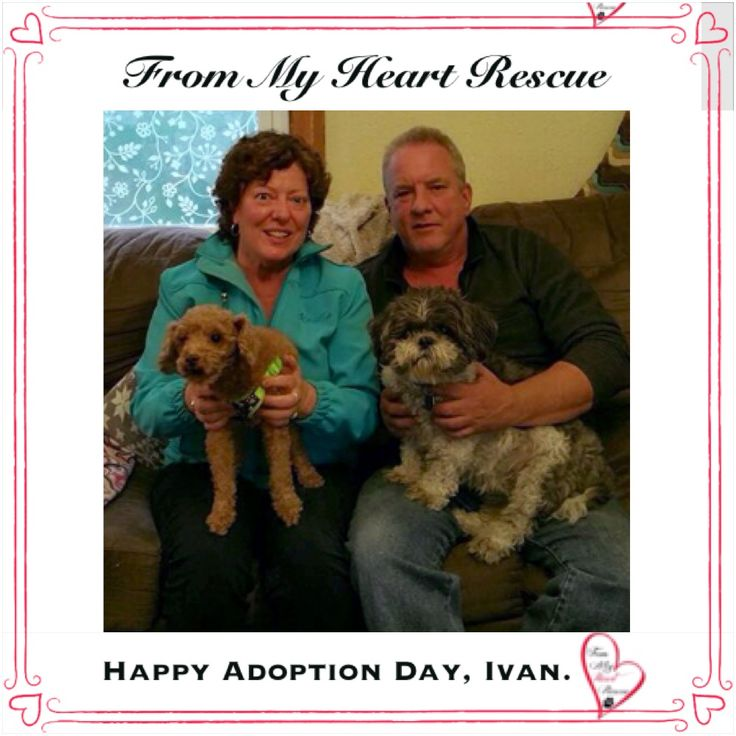 #Please ❤️+ #Pin #FMHR #FromMyHeartRescue #RescueWithoutBorders #SavingOneDogAtaTime ~ #Happy #Adoption #Day #Ivan *Many thanks to Melissa, Dana, Hilary, Cara and family, for all their fabulous volunteer work behind the scenes. ❤️ *Thank you *Info, Foster, Adoption, PayPal & e-transfer: frommyheartrescue@hotmail.com *Our Vets: Brock St. Animal Hospital/FMHR 905-430-2644 *Fundraising & Volunteering: FMHRfundraising@hotmail.com    *Find Us: FB, Twitter, IG, YouTube & Google+